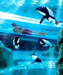 Sea World Orlando Florida (Best Honeymoon Destinations In USA) 1