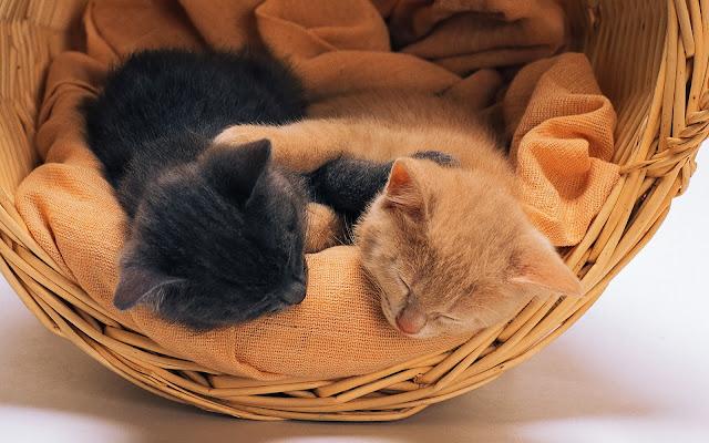 котята спят в корзине