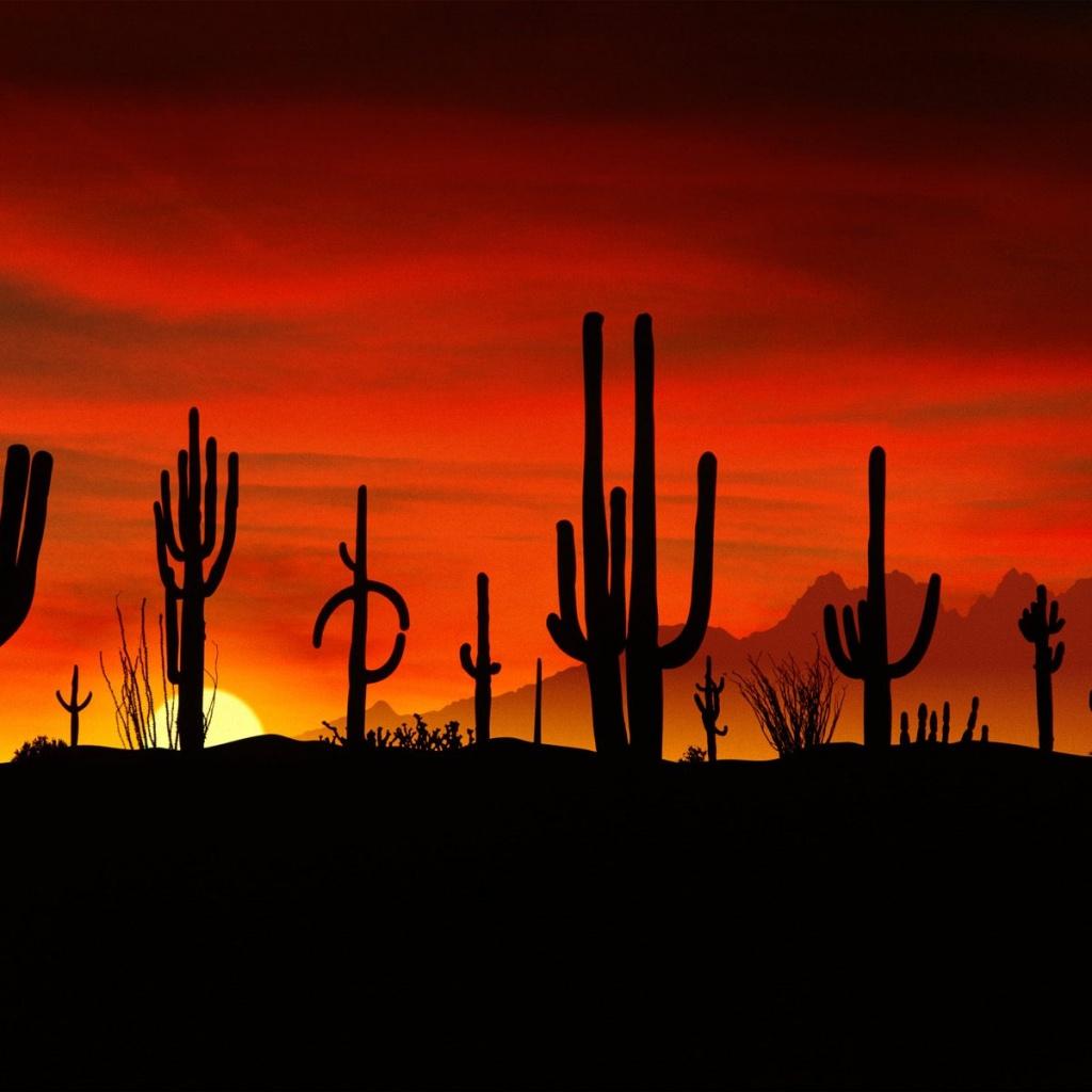 http://1.bp.blogspot.com/-n2T-b9S7Jc0/TmKbnPrw8uI/AAAAAAAAC1Y/KeZaYoAzMMY/s1600/nature-free-wallpapers032-cactus-sunset.jpg