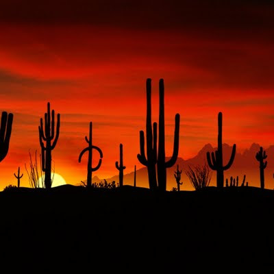 Cactus sunset download free wallpapers for Apple iPad