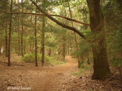 sprookjesachtig bos