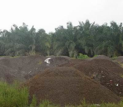 palm kernel shells a potential modifier Palm kernel shells are a by-product of palm plantations used for making organic briquettes (charcoal) ready for selling to chinese buyers.