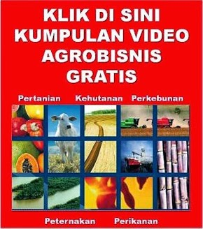 Video Agrobisnis