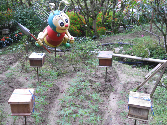 Lebah besar Honey Bee Farm