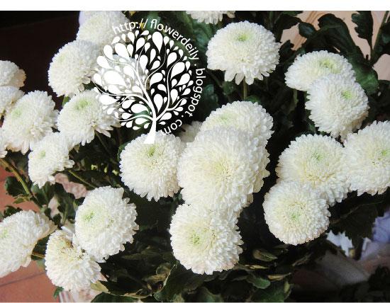 Flower today pom pom or billy button flowers flower daily blog white billy button flowers mightylinksfo