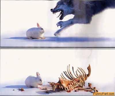 conejo+muy+listo Imagenes de conejos..