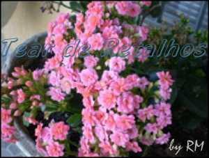 Mini jardim florido