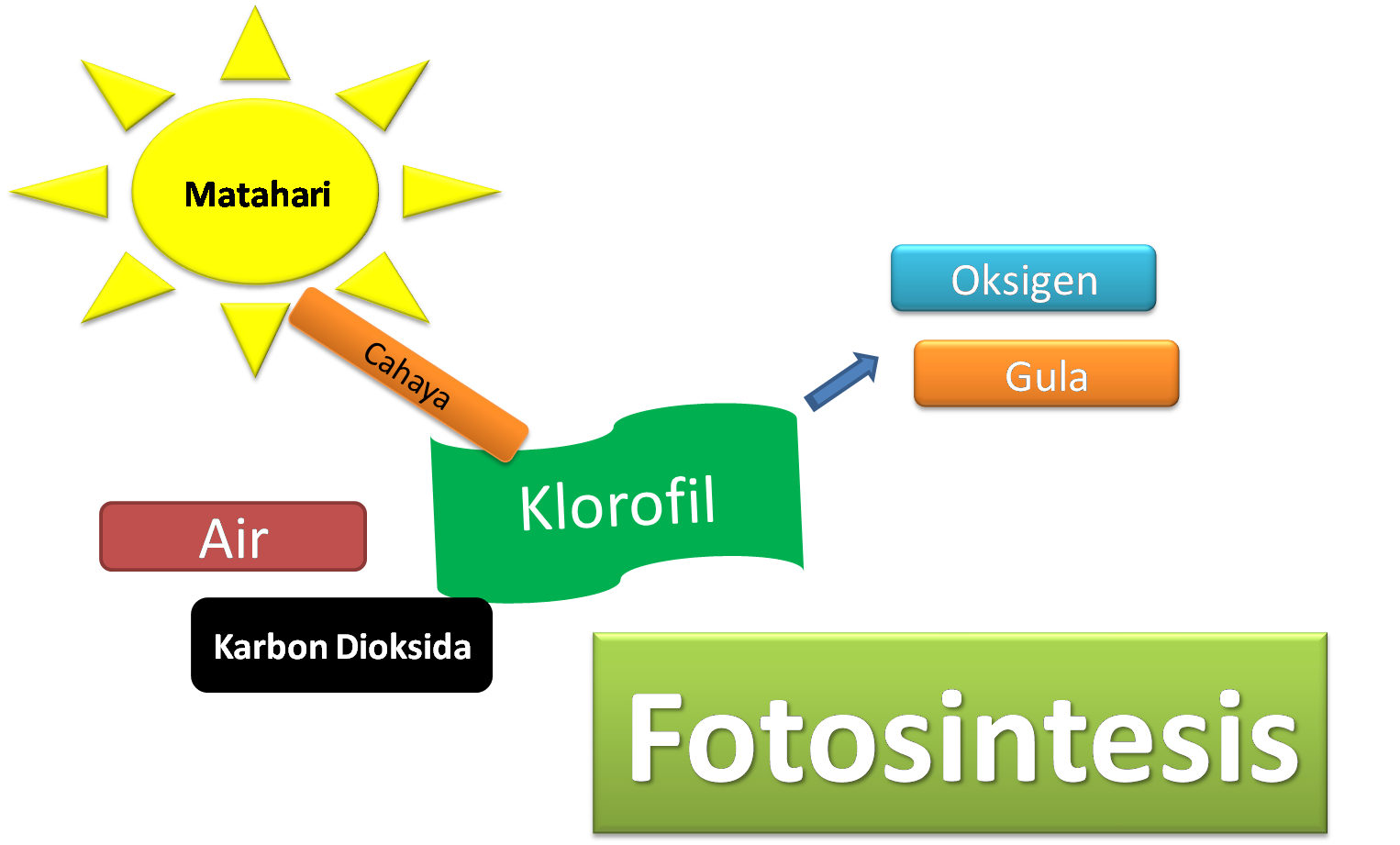 UJI Ingenhousz dan Uji Sach Percobaan Fotosintesis