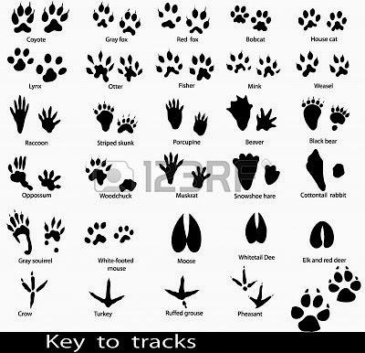Identifying Animal Paw Prints Tracks