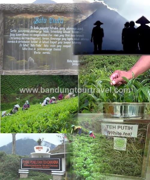 gambung, perkebunan teh gambung, wisata alam, eco wisata di bandung, paket tour edukasi di perkebunan teh Gambung