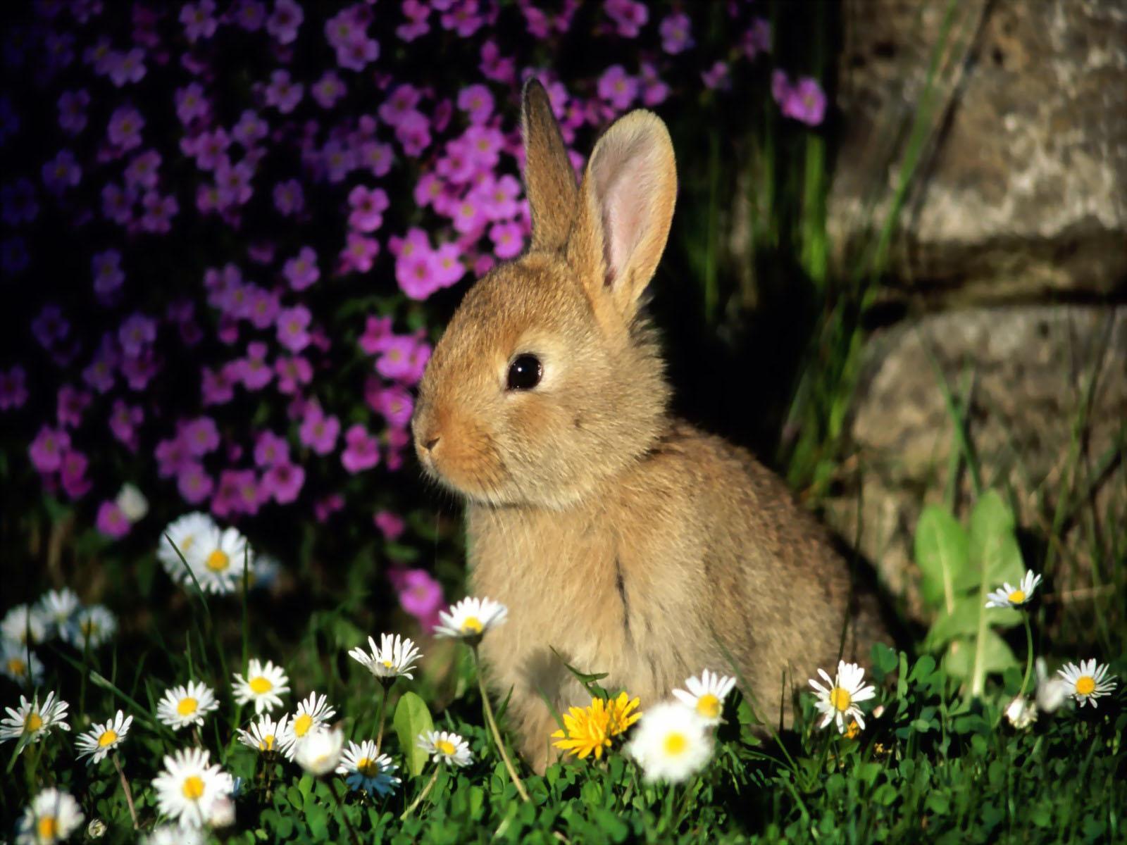Cute Rabbits Top 33 Beautifu...
