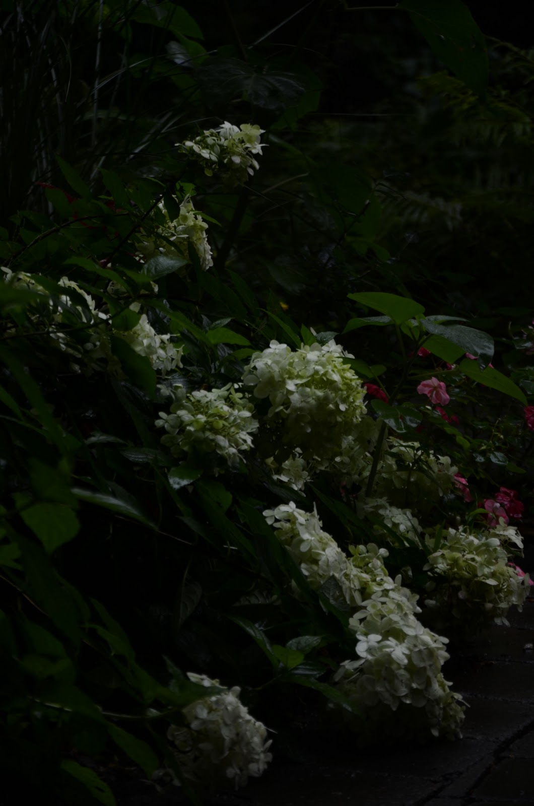 Zone five and a half moonlight garden flowers that go bloom in the night - Flowers that bloom only at night ...