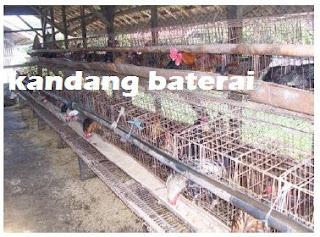 biaya pembuatan kandang ayam petelur