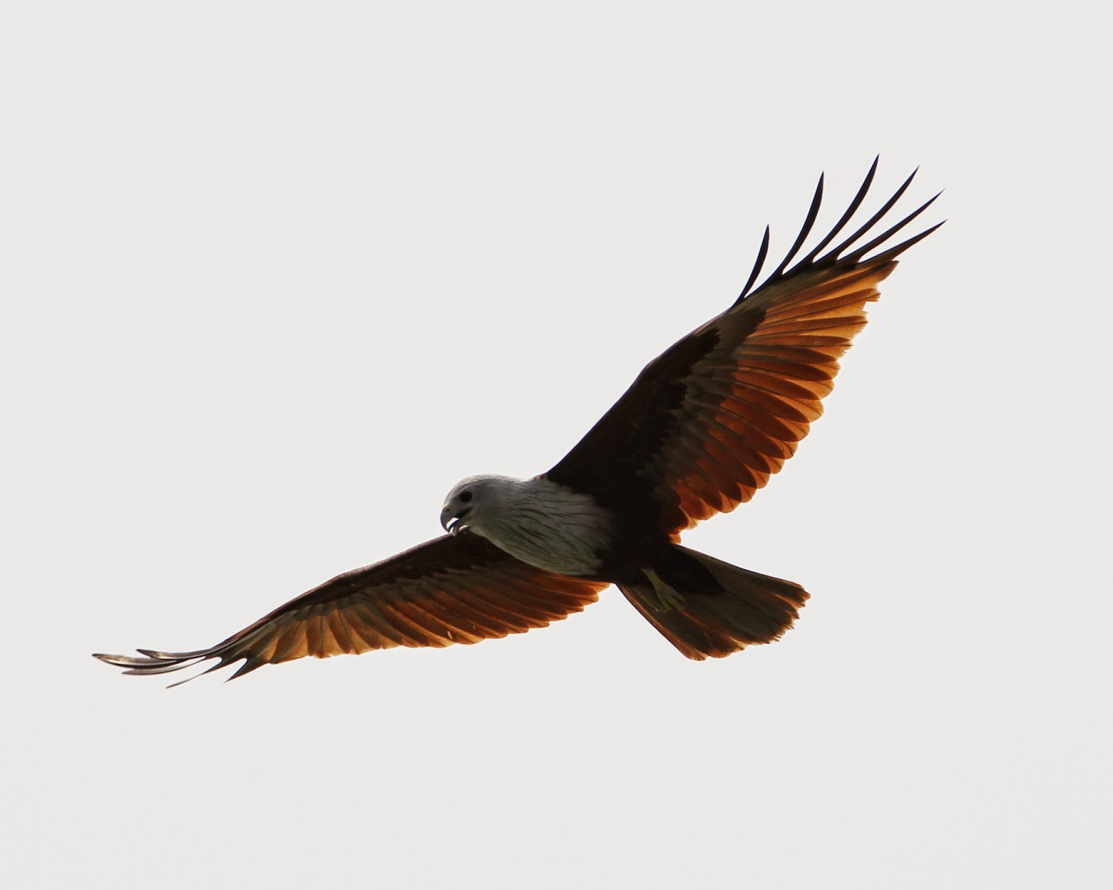Eagle Sight Seeing Tour Sdn Bhd