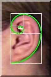 gods-fingerprint-1-6-ear,وداعا لبصمة الأصابع.. أذنك تحدد هويتك اذن ودن اذنان
