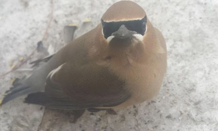 Funny animals of the week - 28 March 2014 (40 pics), masked bird