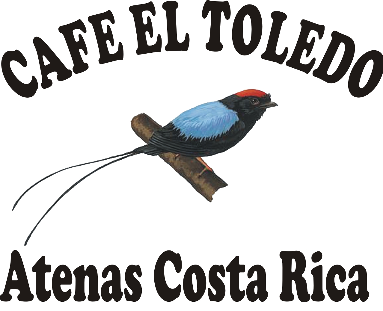Toledo Coffee Tour