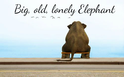 Big, old, lonely Elephant......