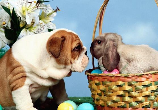 Sms Messaggi Frasi Auguri Divertenti Di Pasqua 2013