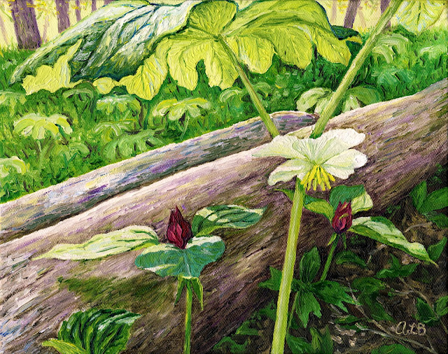 https://www.etsy.com/listing/210579314/may-apple-and-trillium-8-x-10-in-giclee?ref=shop_home_active_15