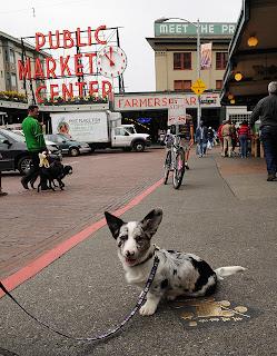 City Friendly Dog Breeds