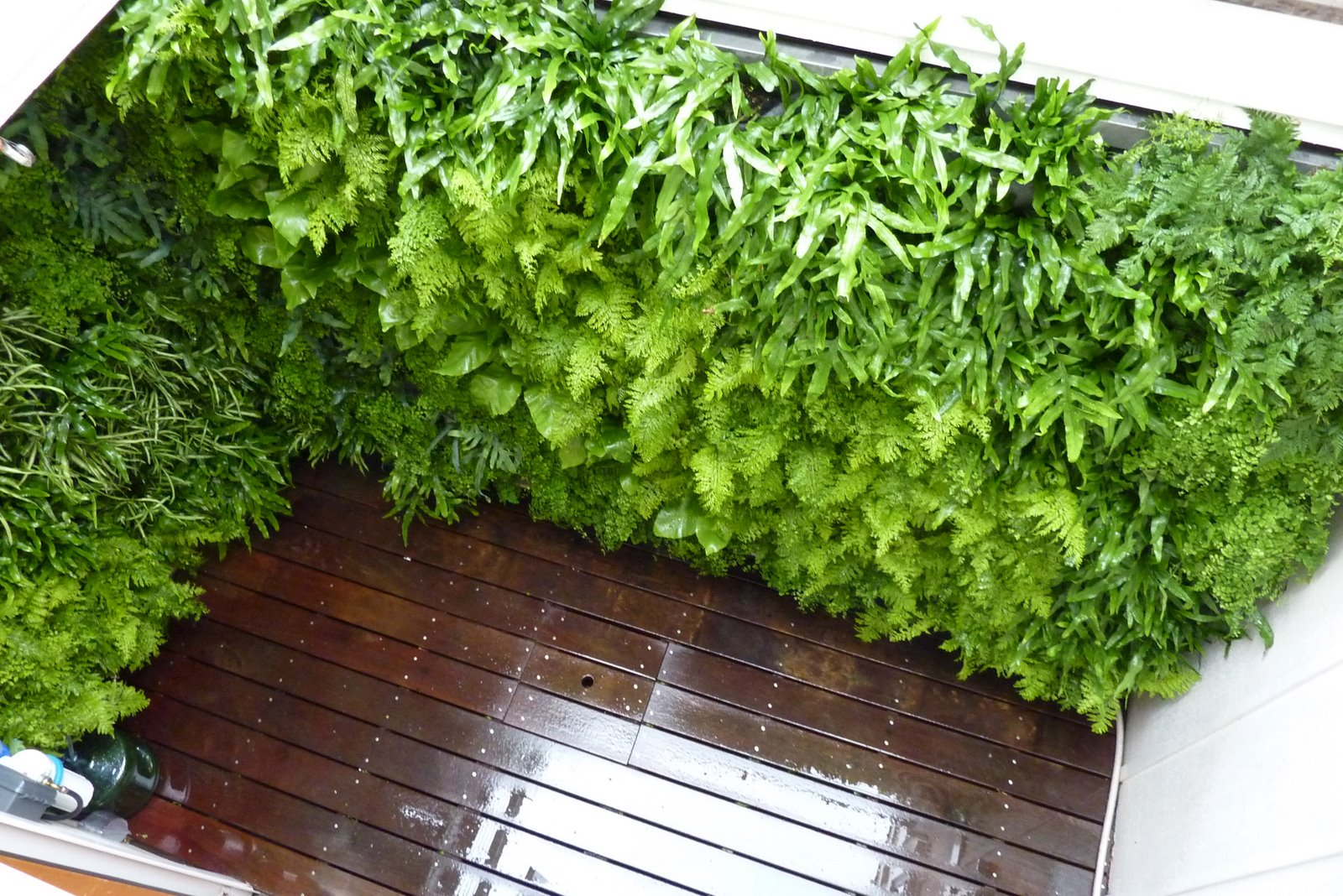 Plants on walls vertical garden systems december 2011 for Wall garden system