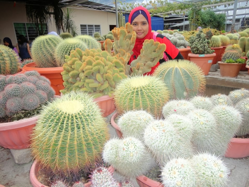 CAMERON HIGHLAND : @ CACTUS VALLEY