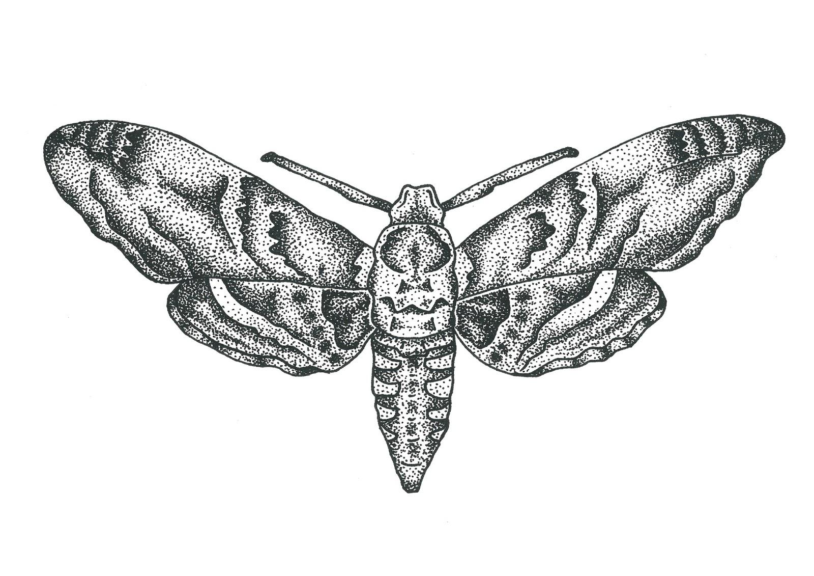Moth drawing - photo#1