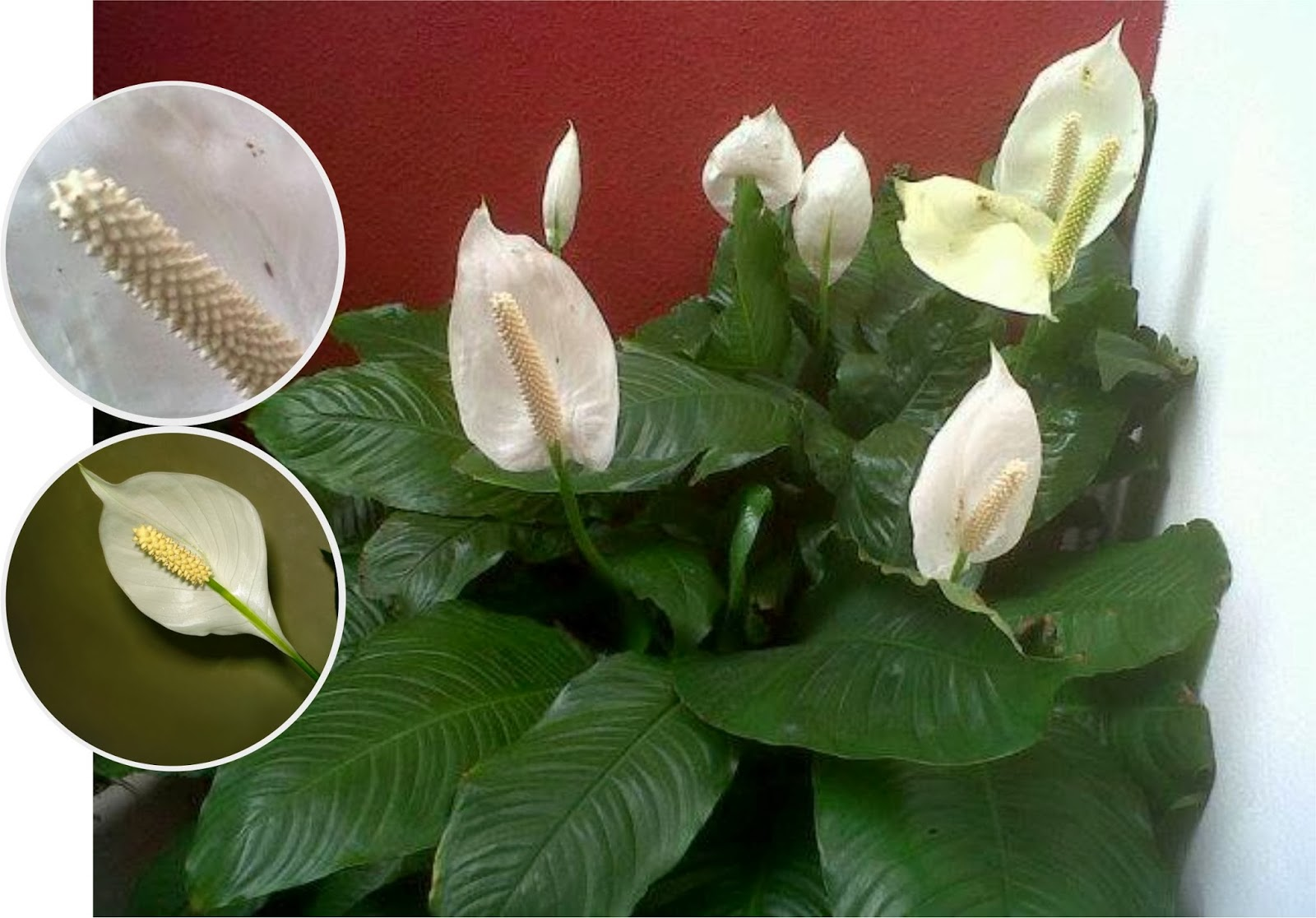 V e r d e c h a c o enero 2014 for Plantas de interior hojas grandes