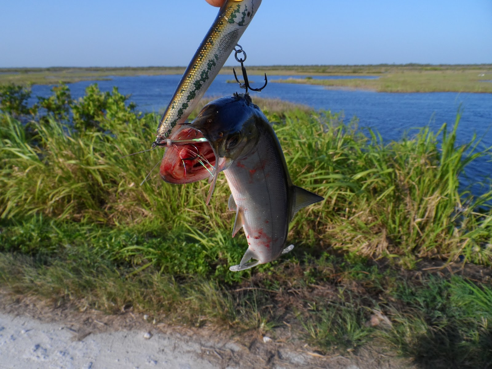 Mosquito lagoon indian river fishing another windy for Indian river fishing
