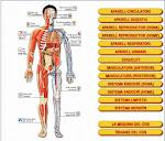 El cos humà 2.0
