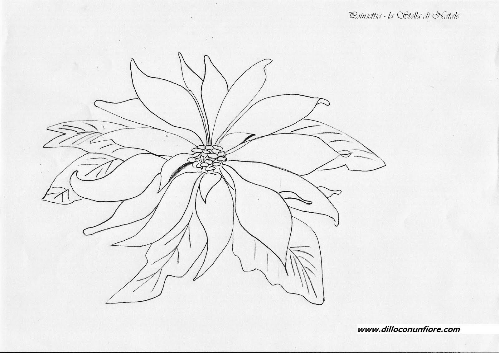 """Search Results for """"Poinsettia Coloring Page"""" – Calendar 2015"""