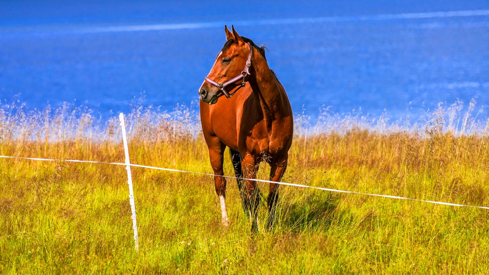 Wonderful   Wallpaper Horse Windows - Animals+WALLPAPERS+softvares4u+(1)  Gallery_628226.jpg