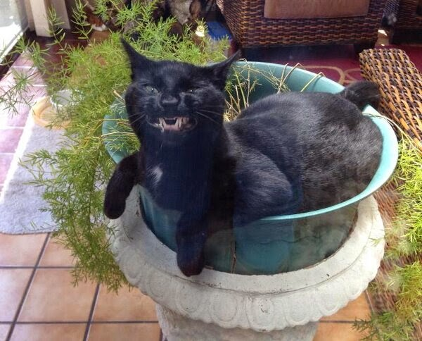 Funny cats - part 99 (40 pics + 10 gifs), cat pictures, cat smirks sitting on pot plant
