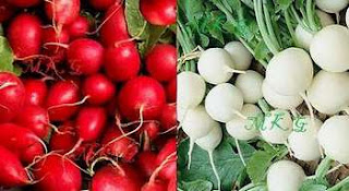 Round Radishes Red and White