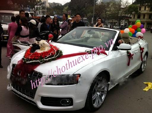 Cho thuê xe cưới mui trần Audi A5