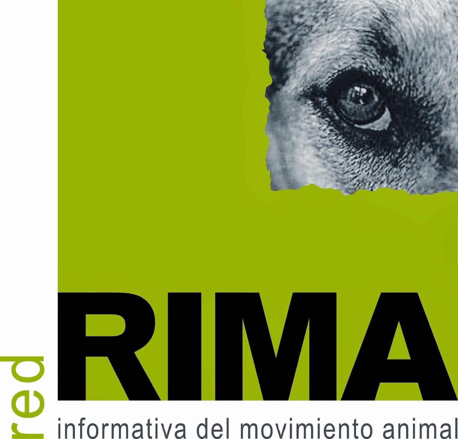 RIMA Chile