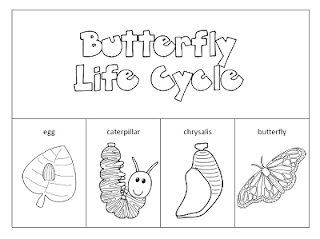 It's just a picture of Tactueux Butterfly Life Cycle Printable