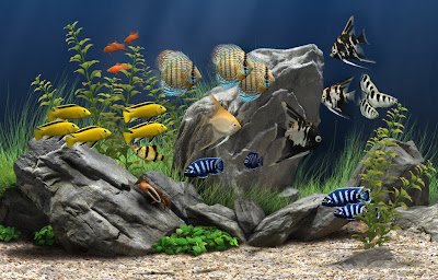 Download screen saver aquarium