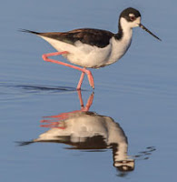 Drought and Waterbirds: Not a good combination