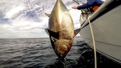 Cena da série Pesca de Gigantes - Divulgação