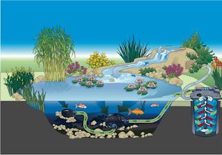 ระบบบ่อปลาคราฟ