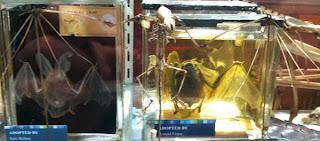 Bat Skeleton - Grant Museum of Zoology Field Trip London - Arts Award Bronze Level Art Portfolio Ideas