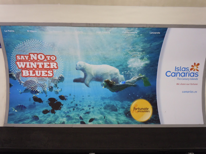 Canary Islands polar bear tube poster