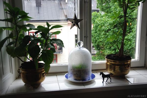aliciasivert, alicia sivertsson, window, växthus, blommor, växter, häst, horse, star, stjärna, flowers, brass, mässing, pots