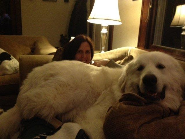 Great Pyrenees Dog House Size