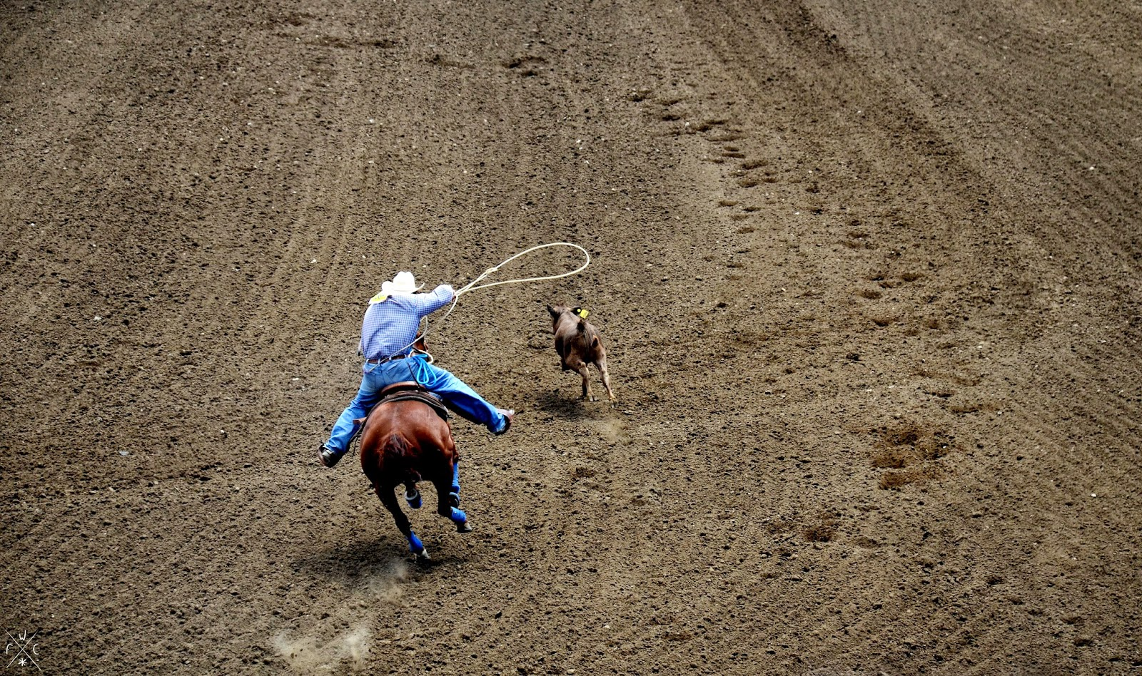 Rodeo - Salinas, Californie, USA