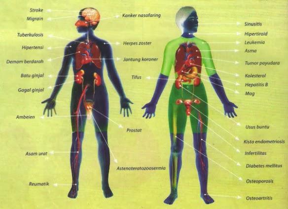 manfaat propolis, khasiat propolis, propolis brazilian, propolis nano, propolis terbaik, harga propolis, jual propolis, obat propolis, efek samping propolis, dosis  propolis