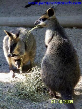 como ir a featherdale wildlife park desde sydney