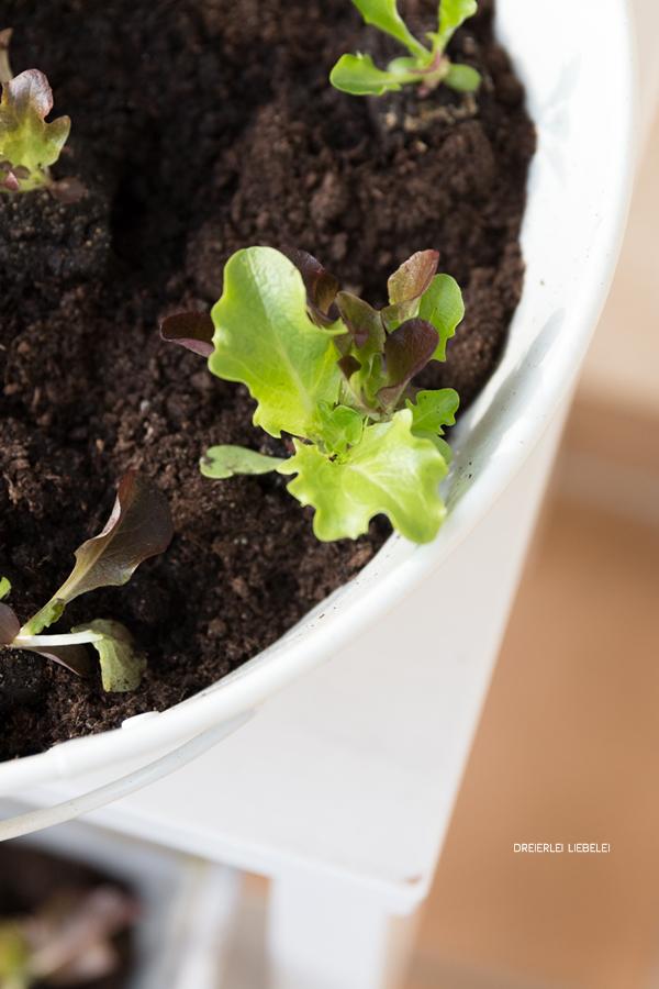 dreierlei liebelei von schwarz zu gr n urban gardening. Black Bedroom Furniture Sets. Home Design Ideas